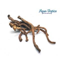 racines de pissenlit pour crevettes d'aquarium