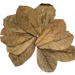 10 feuilles de catappa 28 cm