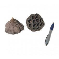 Gousse de lotus pour aquarium