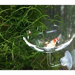 Coupelle Acrylique crevette à ventouse 6 cm