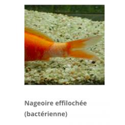 traitement poisson aquarium