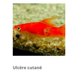 traitement général poisson d'aquarium