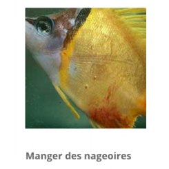 Aquarium münster Virumor