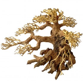 Bonsaï wood M