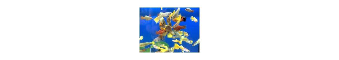 Aliments pour poissons d'aquarium
