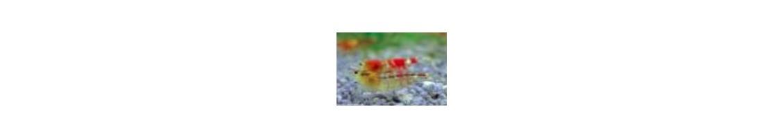 Vitamines pour crevettes d'aquarium