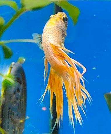 Crevettes et poissons